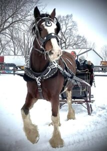 Sleigh Rides at Claystone Stock Farms